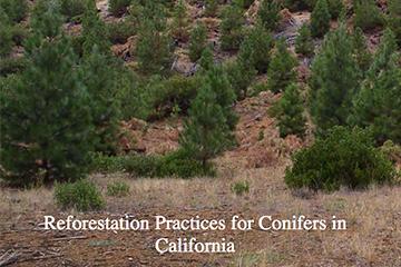 Reforestation-img.jpg